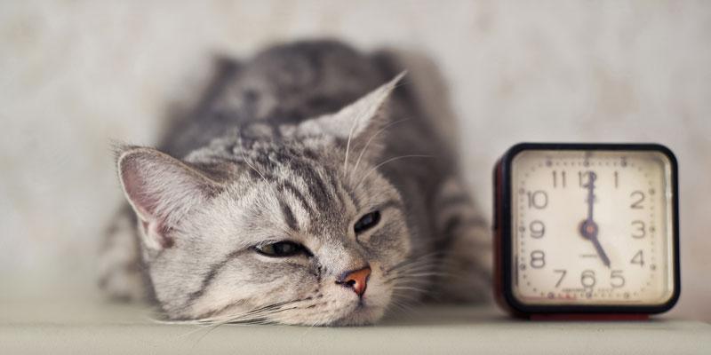 نتيجة بحث الصور عن cat patient