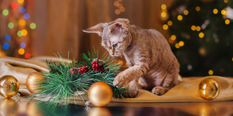 Holidays and Cat Dangers