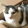 cat behavior success