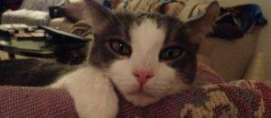 cat behavior help