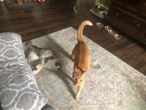 my kittens bite