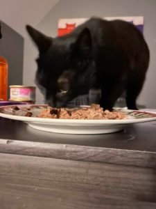 cats need meat